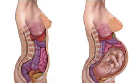 بارداری ، تغییرات بدن ، زایمان طبیعی
